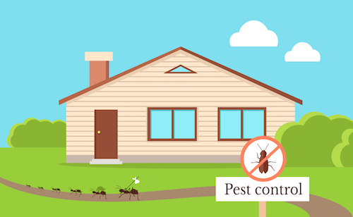 home pest control Gold Coast